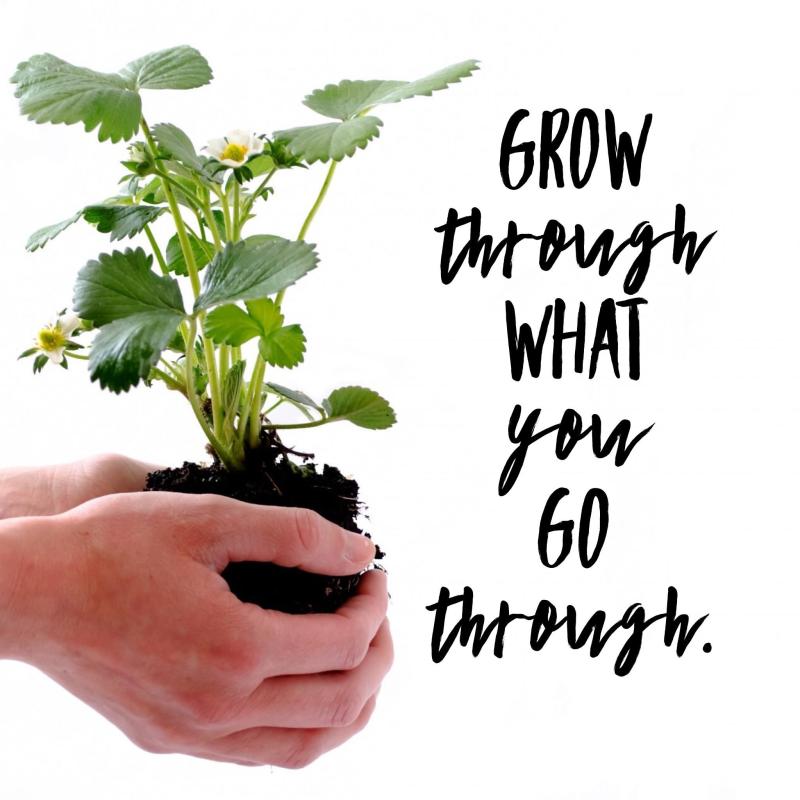 Grow pic